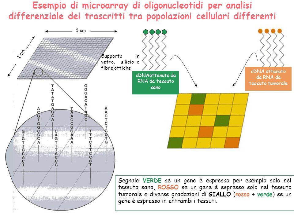 Esempio di microarray di oligonucleotidi per analisi differenziale dei trascritti tra popolazioni cellulari differenti