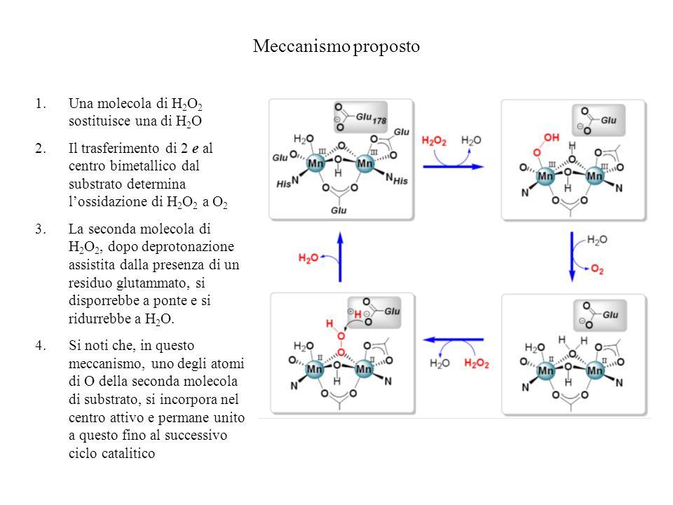Meccanismo proposto Una molecola di H2O2 sostituisce una di H2O