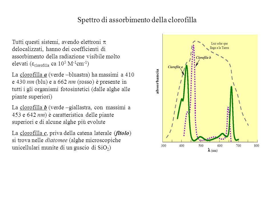 Spettro di assorbimento della clorofilla