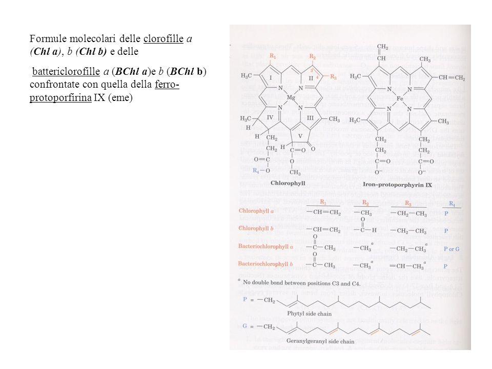 Formule molecolari delle clorofille a (Chl a), b (Chl b) e delle