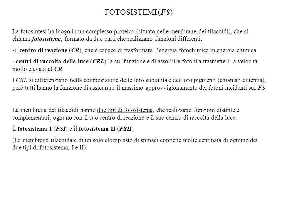 FOTOSISTEMI (FS)