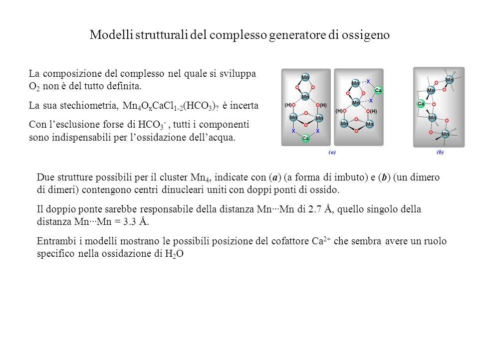 Modelli strutturali del complesso generatore di ossigeno