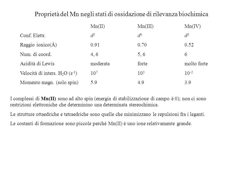 Proprietà del Mn negli stati di ossidazione di rilevanza biochimica