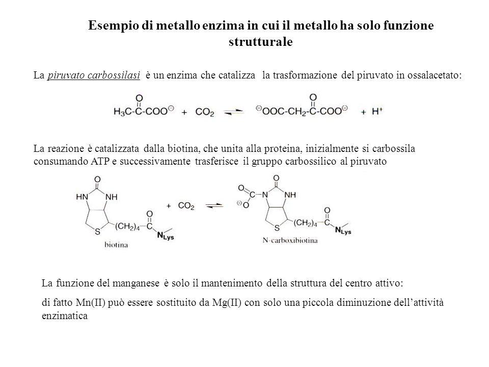 Esempio di metallo enzima in cui il metallo ha solo funzione strutturale