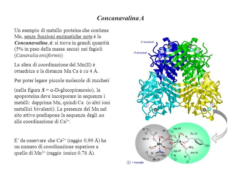 Concanavalina A