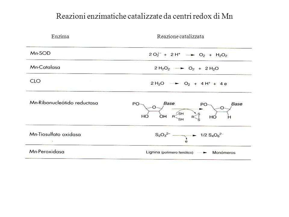 Reazioni enzimatiche catalizzate da centri redox di Mn