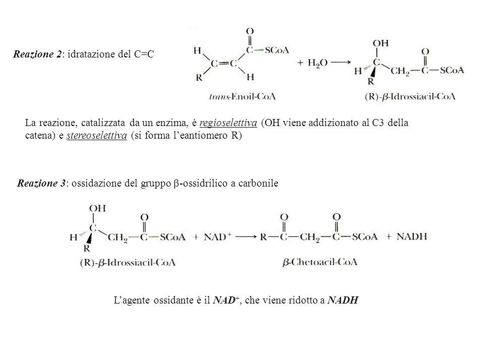 L'agente ossidante è il NAD+, che viene ridotto a NADH