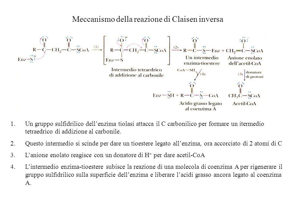 Meccanismo della reazione di Claisen inversa