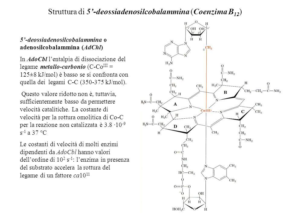 Struttura di 5'-deossiadenosilcobalammina (Coenzima B12)