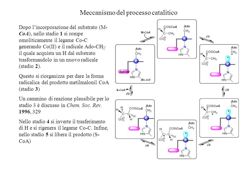 Meccanismo del processo catalitico