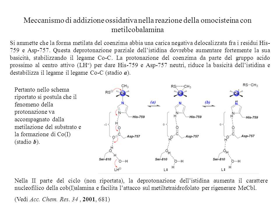 Meccanismo di addizione ossidativa nella reazione della omocisteina con metilcobalamina