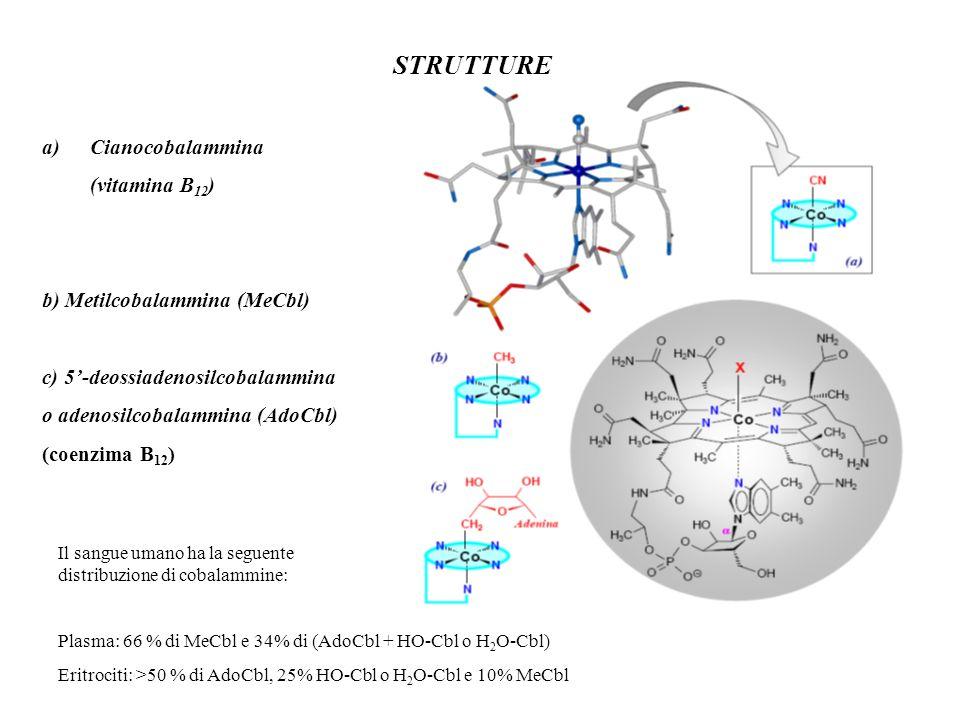 STRUTTURE Cianocobalammina (vitamina B12) b) Metilcobalammina (MeCbl)