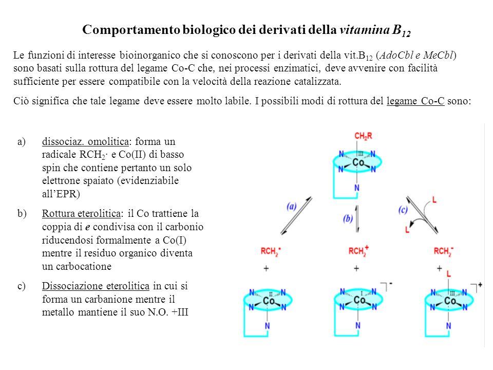 Comportamento biologico dei derivati della vitamina B12