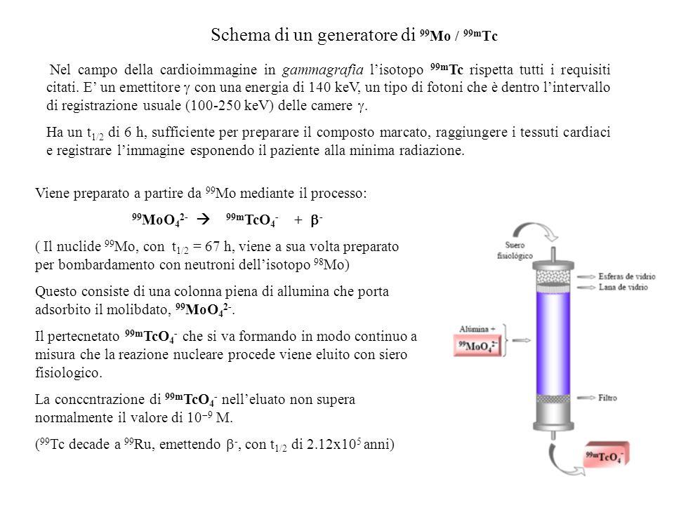 Schema di un generatore di 99Mo / 99mTc