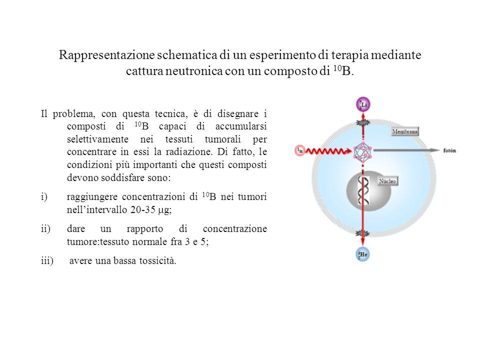 Rappresentazione schematica di un esperimento di terapia mediante cattura neutronica con un composto di 10B.