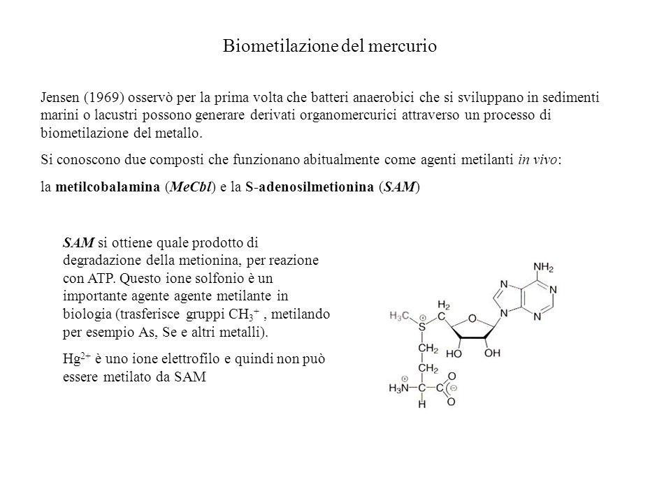 Biometilazione del mercurio