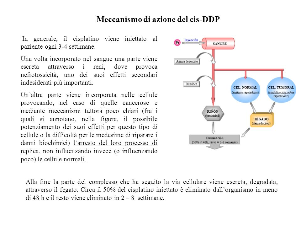 Meccanismo di azione del cis-DDP