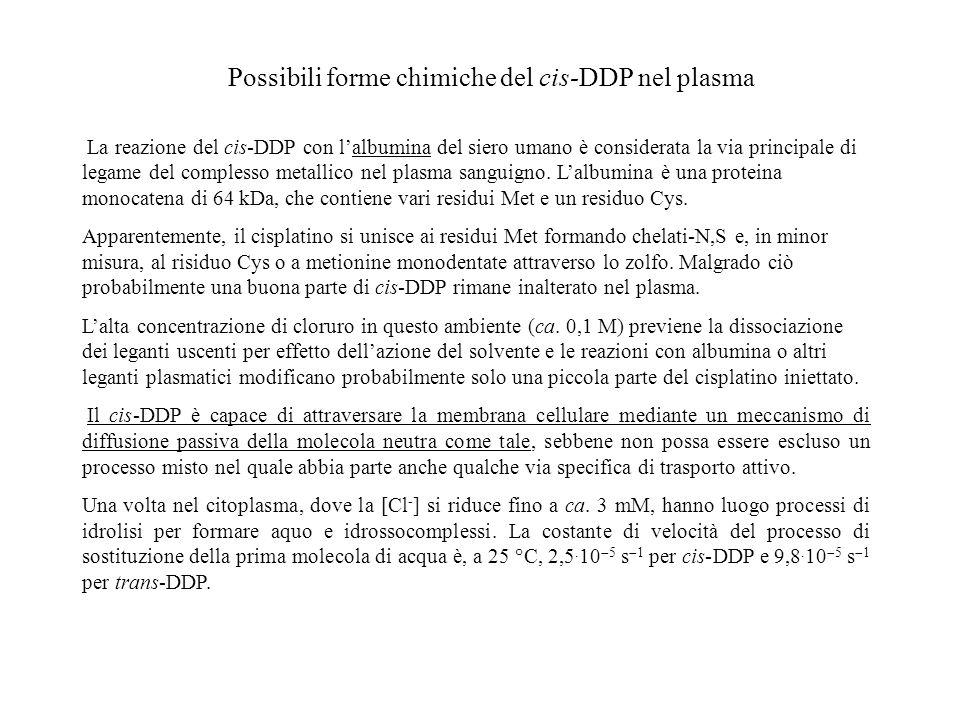 Possibili forme chimiche del cis-DDP nel plasma