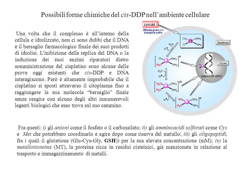 Possibili forme chimiche del cis-DDP nell'ambiente cellulare