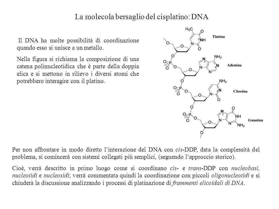 La molecola bersaglio del cisplatino: DNA