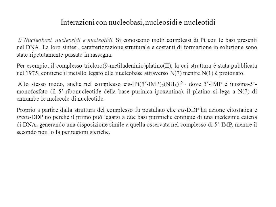 Interazioni con nucleobasi, nucleosidi e nucleotidi