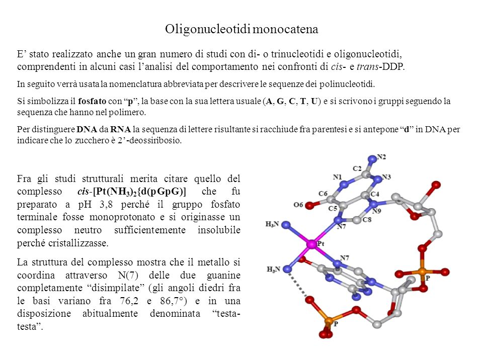 Oligonucleotidi monocatena