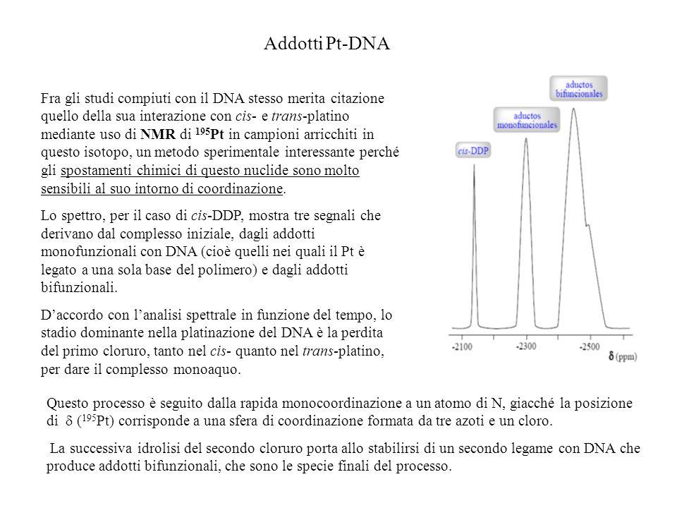 Addotti Pt-DNA