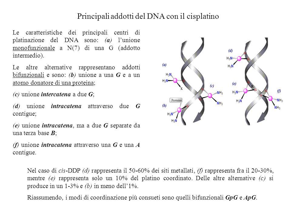 Principali addotti del DNA con il cisplatino