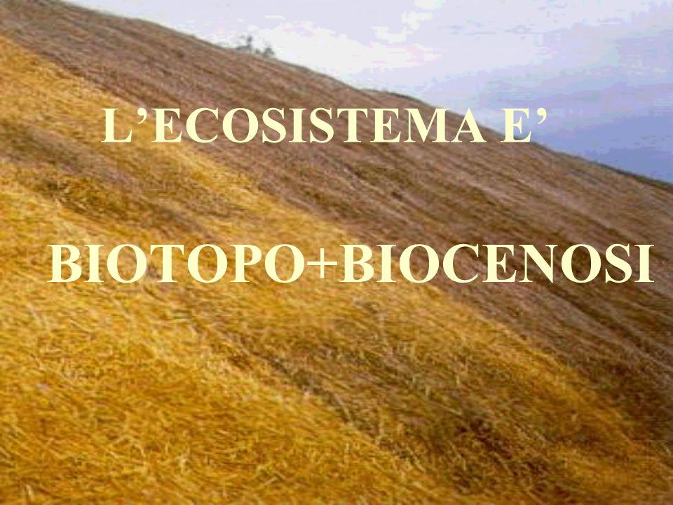 L'ECOSISTEMA E' BIOTOPO+BIOCENOSI