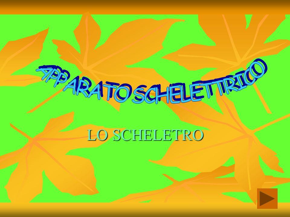 APPARATO SCHELETTRICO