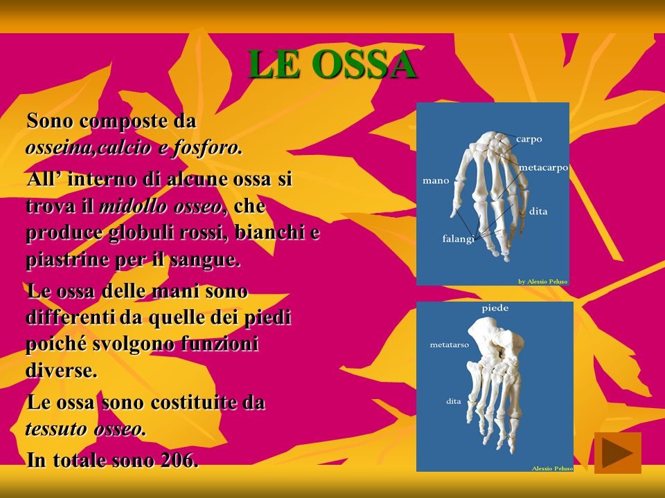 LE OSSA Sono composte da osseina,calcio e fosforo.