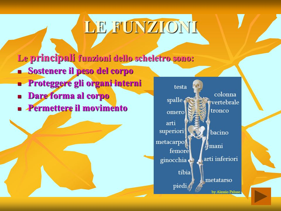 LE FUNZIONI Le principali funzioni dello scheletro sono: