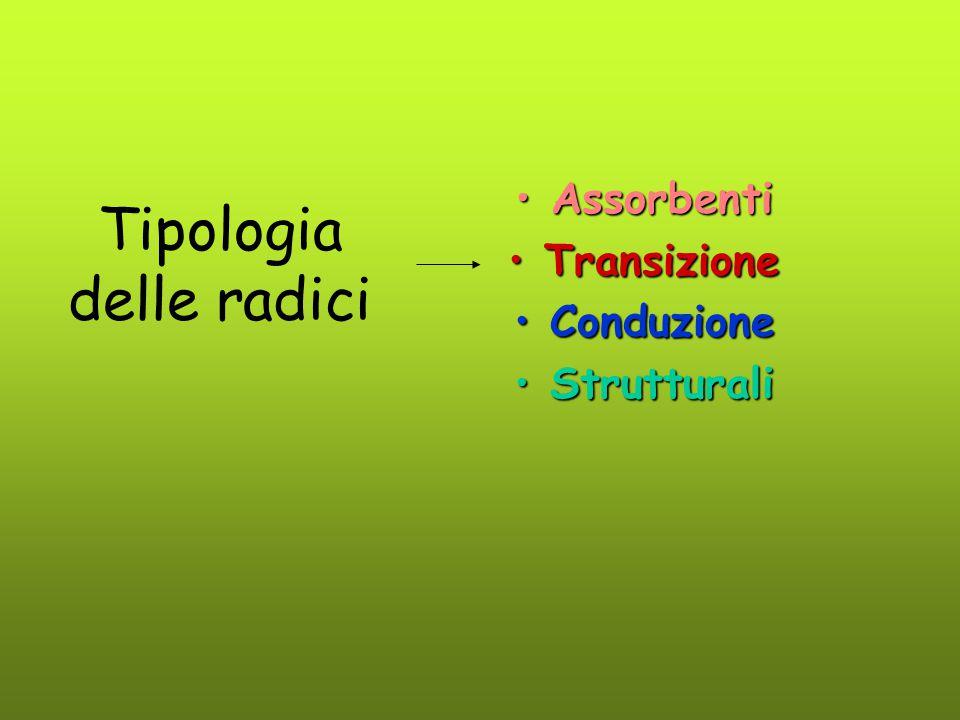 Tipologia delle radici