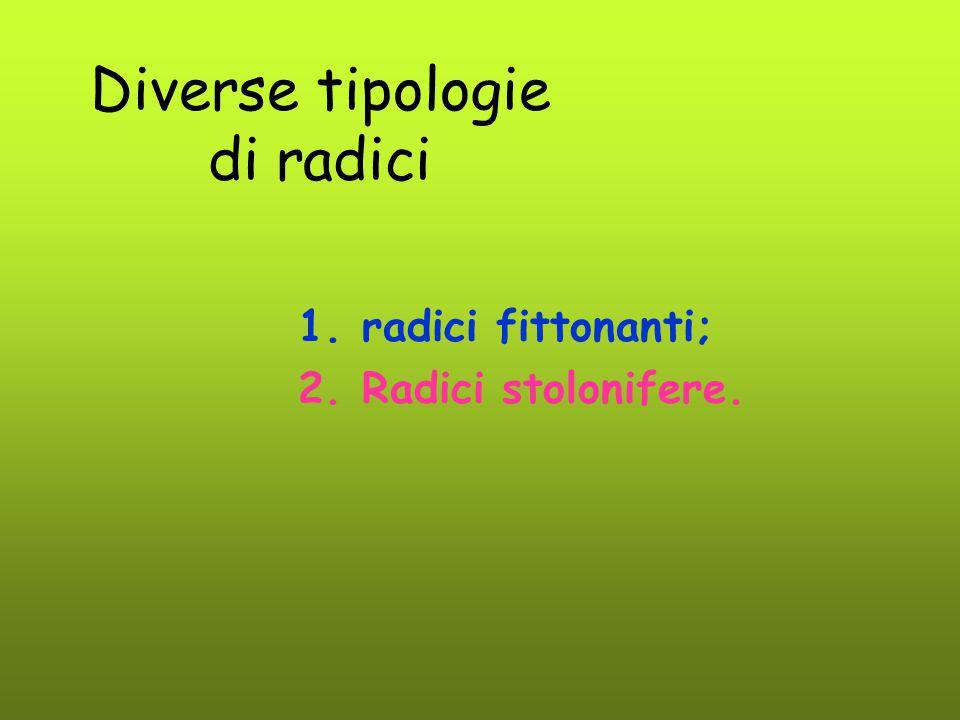 Diverse tipologie di radici