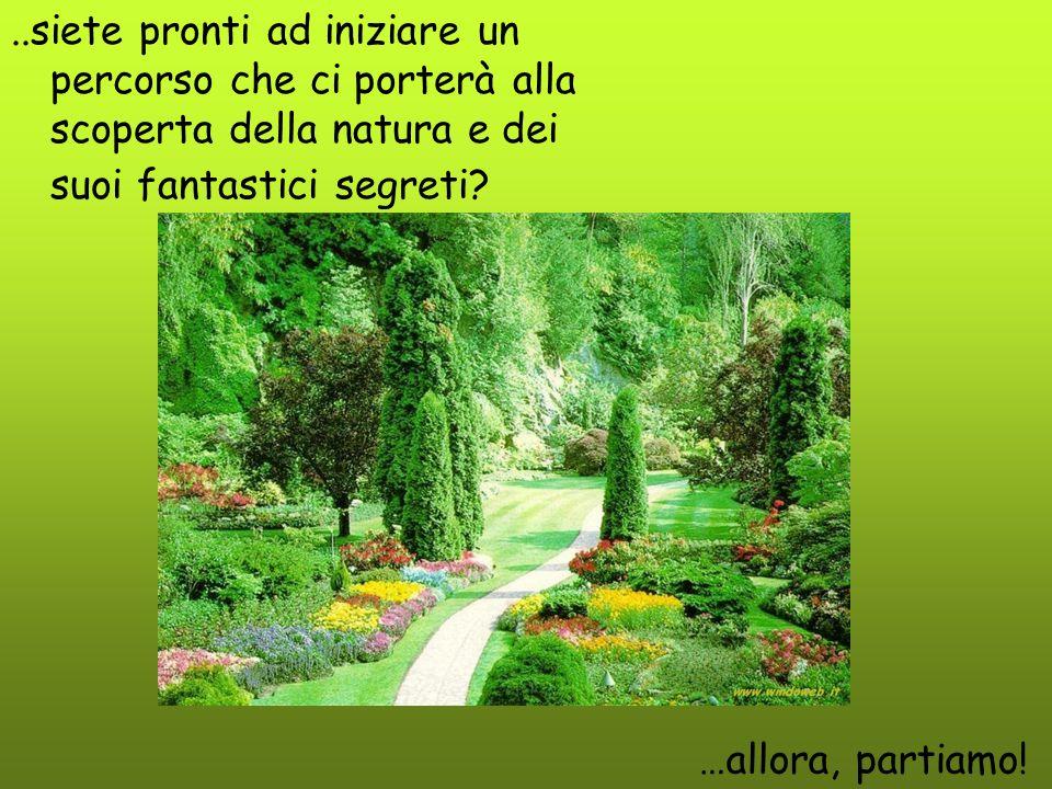 ..siete pronti ad iniziare un percorso che ci porterà alla scoperta della natura e dei suoi fantastici segreti