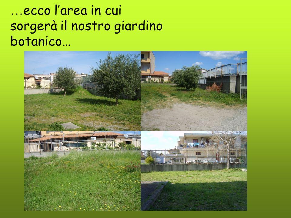 …ecco l'area in cui sorgerà il nostro giardino botanico…