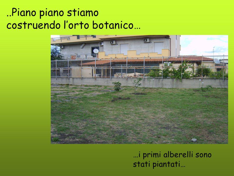 ..Piano piano stiamo costruendo l'orto botanico…