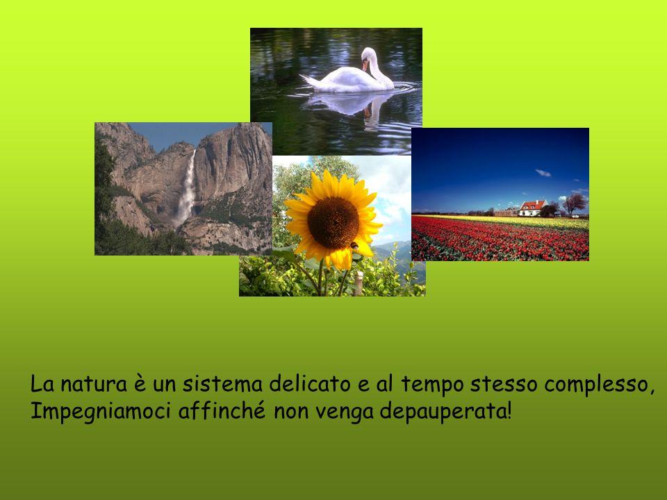 La natura è un sistema delicato e al tempo stesso complesso,