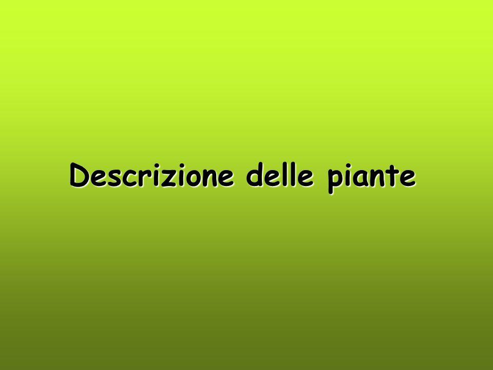Descrizione delle piante