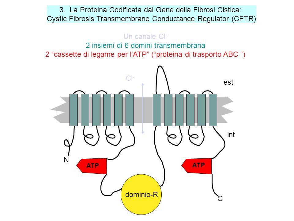 3. La Proteina Codificata dal Gene della Fibrosi Cistica: