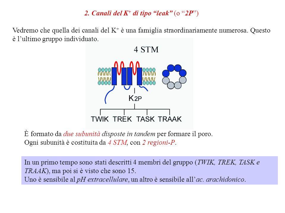 2. Canali del K+ di tipo leak (o 2P )