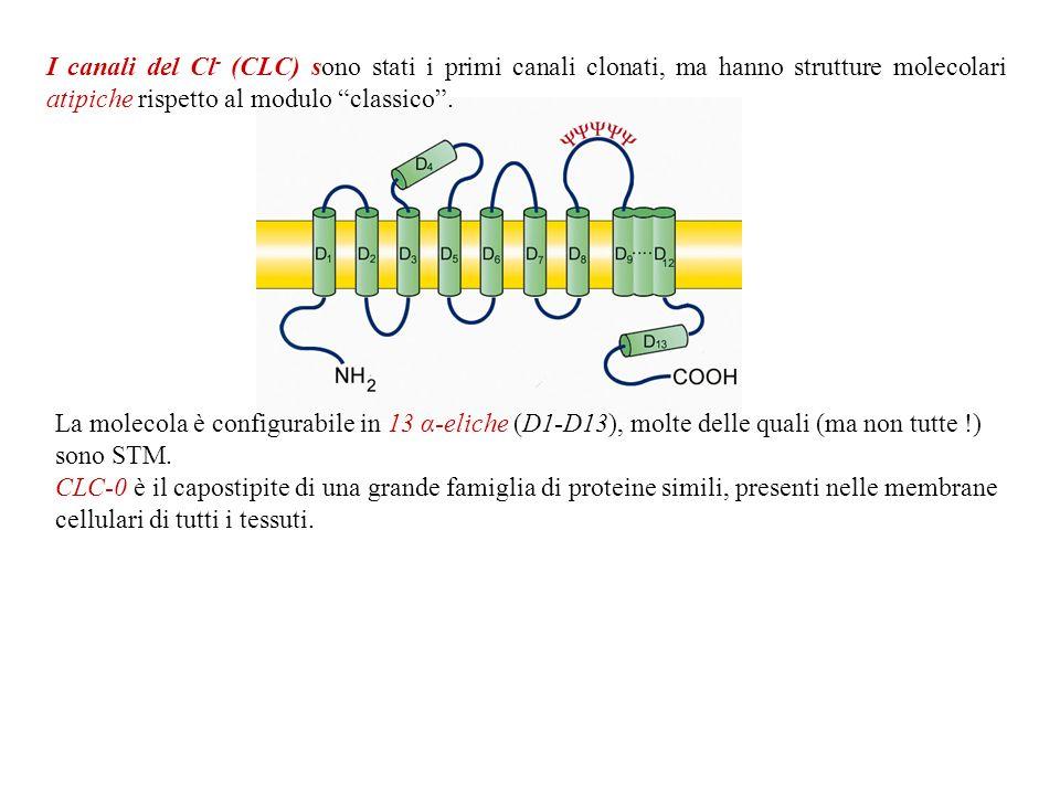 I canali del Cl- (CLC) sono stati i primi canali clonati, ma hanno strutture molecolari atipiche rispetto al modulo classico .