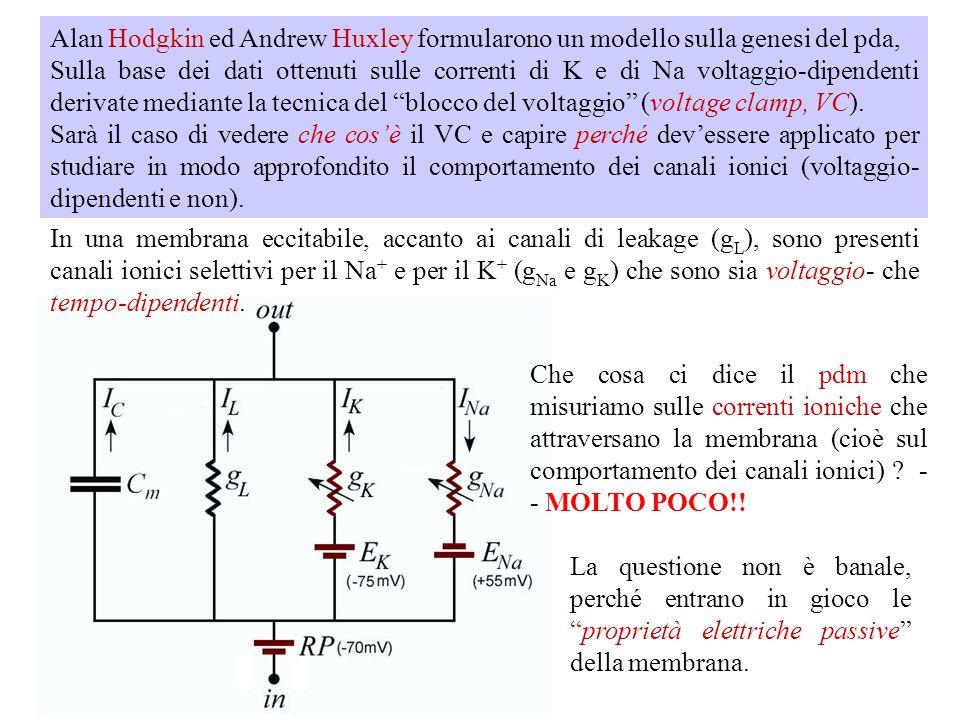 Alan Hodgkin ed Andrew Huxley formularono un modello sulla genesi del pda,
