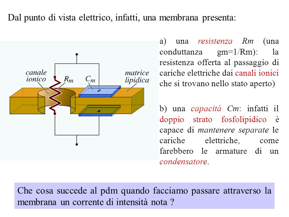 Dal punto di vista elettrico, infatti, una membrana presenta: