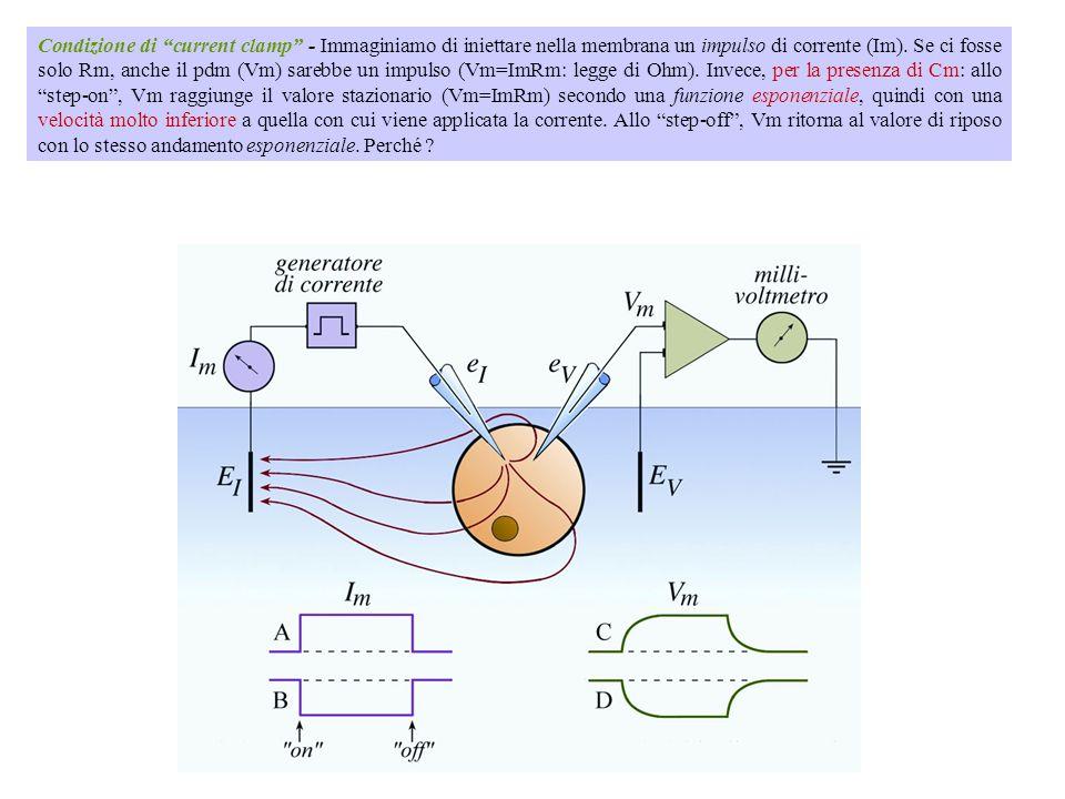 Condizione di current clamp - Immaginiamo di iniettare nella membrana un impulso di corrente (Im).