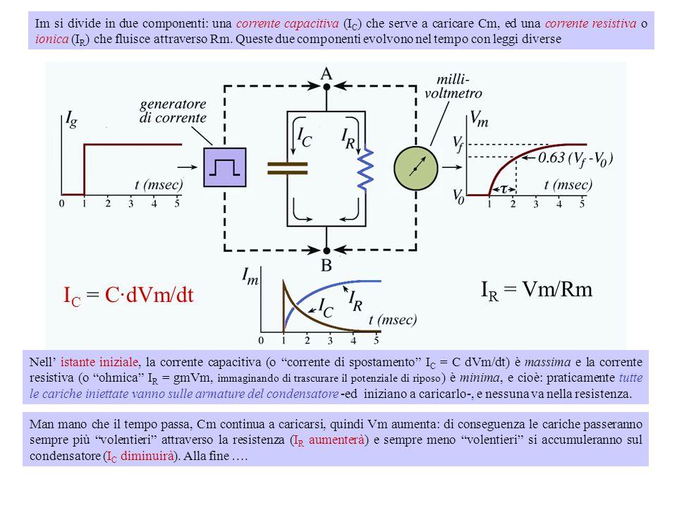 Im si divide in due componenti: una corrente capacitiva (IC) che serve a caricare Cm, ed una corrente resistiva o ionica (IR) che fluisce attraverso Rm. Queste due componenti evolvono nel tempo con leggi diverse