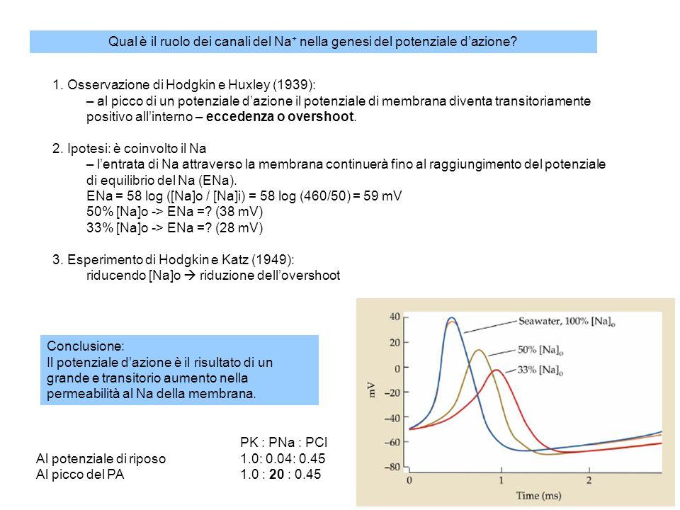 Qual è il ruolo dei canali del Na+ nella genesi del potenziale d'azione