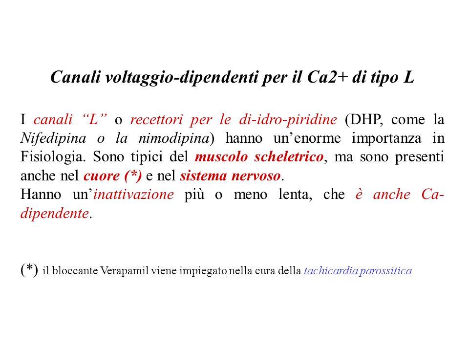 Canali voltaggio-dipendenti per il Ca2+ di tipo L