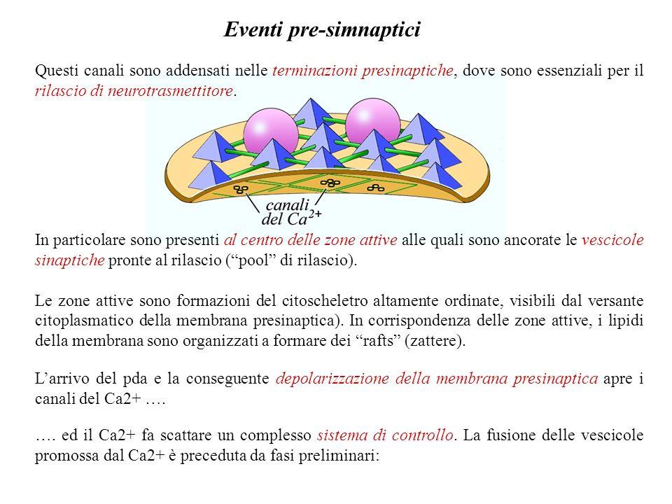 Eventi pre-simnaptici