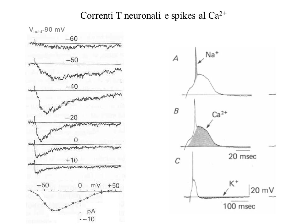 Correnti T neuronali e spikes al Ca2+